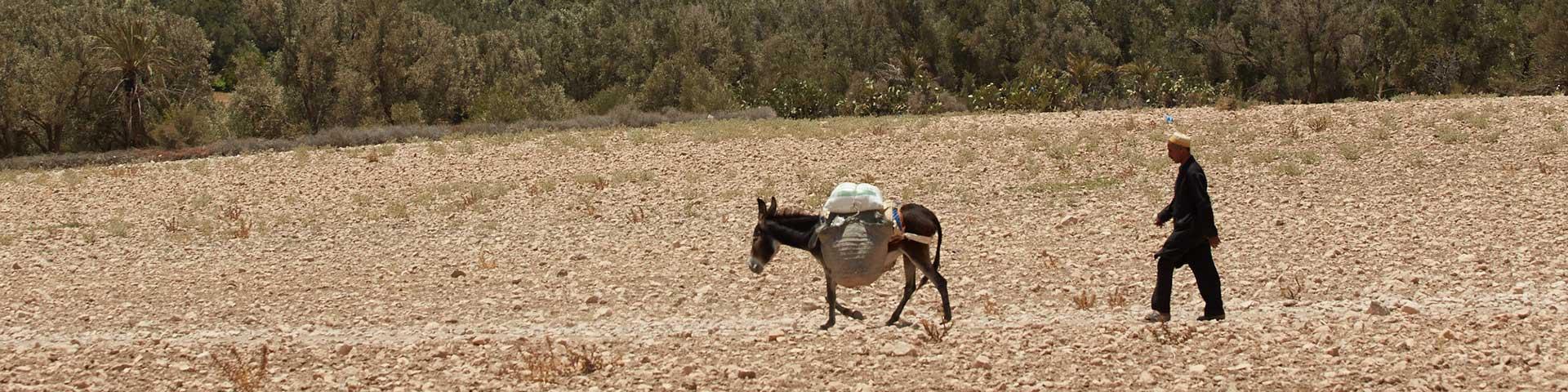 Essaouira Countryside